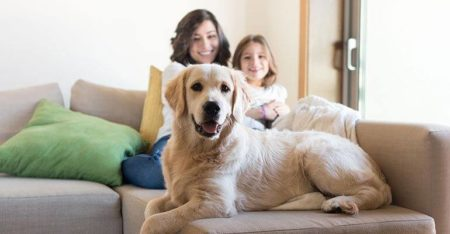 4 Tips to buying a pet-friendly property